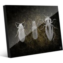 "Creative Gallery Beetles in Grey on Olive Green 16"" x 20"" Acrylic Wall Art Print"