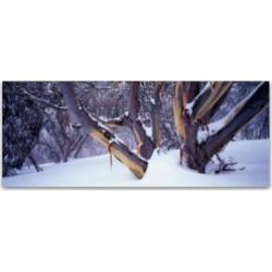 David Evans 'Highcountry Snowgums' Canvas Art - 32