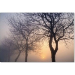 Cora Niele 'Hazy Sunrise With Tree Tree Silhouettes' Canvas Art - 32