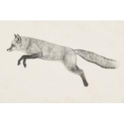 Victoria Borges Flying Fox Ii Canvas Art - 36.5