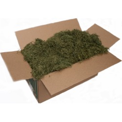 Spanish Moss Green 10 Lb Box by Spirit Halloween