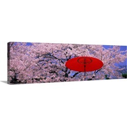 Large Gallery-Wrapped Canvas Wall Art Print 36 x 12 entitled Red Umbrella and Cherry Blossoms Hikone Shiga Japan