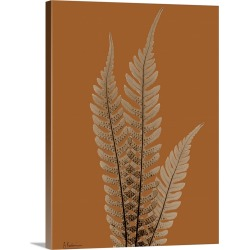 Large Solid-Faced Canvas Print Wall Art Print 30 x 40 entitled Sepia Tree Fern X-Ray Photograph