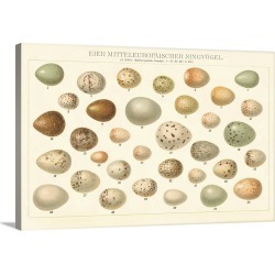 Large Solid-Faced Canvas Print Wall Art Print 30 x 20 entitled Song Bird Egg Chart v2 found on Bargain Bro Philippines from Great Big Canvas for $189.99
