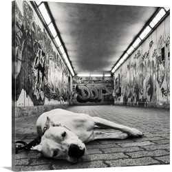 Large Solid-Faced Canvas Print Wall Art Print 20 x 20 entitled A dog looking at the camera with sad but sweet eyes in unde...
