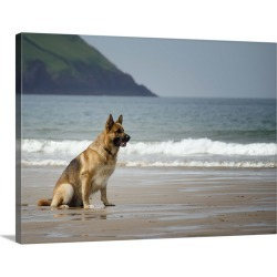 Large Solid-Faced Canvas Print Wall Art Print 40 x 30 entitled A German Shepherd watching the waves on the beach found on Bargain Bro India from Great Big Canvas - Dynamic for $274.99