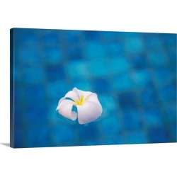 Large Solid-Faced Canvas Print Wall Art Print 30 x 20 entitled Frangipani flower in pool, Ubud, Bali, Indonesia found on Bargain Bro India from Great Big Canvas - Dynamic for $169.99