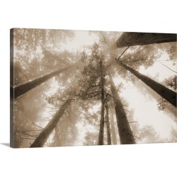 Large Solid-Faced Canvas Print Wall Art Print 36 x 24 entitled Redwood Forest, Northern California, USA found on Bargain Bro Philippines from Great Big Canvas for $259.99