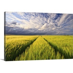 Large Gallery-Wrapped Canvas Wall Art Print 24 x 16 entitled Pathway in wheat field under dramatic sky