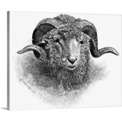 Large Solid-Faced Canvas Print Wall Art Print 30 x 24 entitled Head Of A Merino Ram, 19th Century