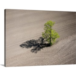 Large Solid-Faced Canvas Print Wall Art Print 40 x 30 entitled Lonely Tree, Richmond, Canada - Aerial Photograph