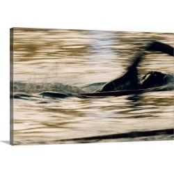 Large Gallery-Wrapped Canvas Wall Art Print 24 x 16 entitled A swimmer in motion