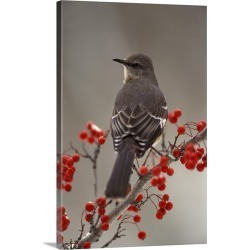 Large Gallery-Wrapped Canvas Wall Art Print 20 x 30 entitled Mockingbird among hawthorn berries
