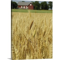 Large Solid-Faced Canvas Print Wall Art Print 30 x 40 entitled Wheat field