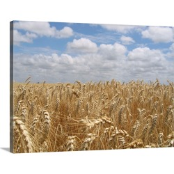 Large Solid-Faced Canvas Print Wall Art Print 40 x 30 entitled Wheat field