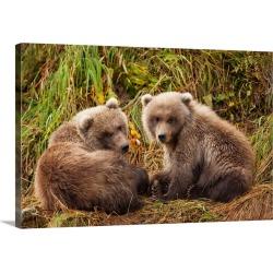Large Gallery-Wrapped Canvas Wall Art Print 30 x 20 entitled Brown Bear Spring Cubs, Katmai National Park, Alaska