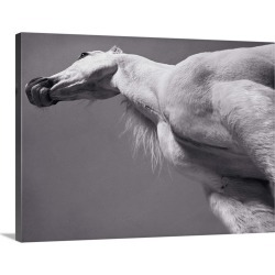 Large Solid-Faced Canvas Print Wall Art Print 40 x 30 entitled White Arabian horse found on Bargain Bro India from Great Big Canvas - Dynamic for $274.99