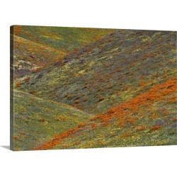 Large Gallery-Wrapped Canvas Wall Art Print 24 x 16 entitled Wildflowers, Tehachapi Hills near Gorman, California found on Bargain Bro India from Great Big Canvas - Dynamic for $214.99