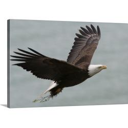 Large Gallery-Wrapped Canvas Wall Art Print 30 x 20 entitled Kukak Bay, Katmai National Park And Preserve, Alaska