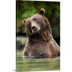Large Gallery-Wrapped Canvas Wall Art Print 20 x 30 entitled Brown Bear, Katmai National Park, Alaska
