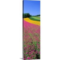 Large Solid-Faced Canvas Print Wall Art Print 16 x 48 entitled Field of Flowers Nakafurano Hokkaido Japan