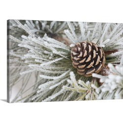 Large Solid-Faced Canvas Print Wall Art Print 30 x 20 entitled Needles Of A Pine Tree And A Pine Cone Covered In Frost, Ca...