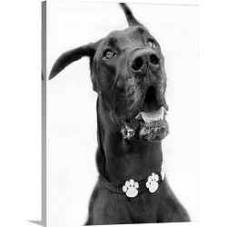 Large Gallery-Wrapped Canvas Wall Art Print 18 x 24 entitled A great dane