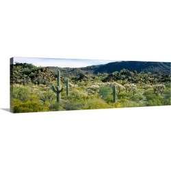 Large Gallery-Wrapped Canvas Wall Art Print 36 x 12 entitled Saguaro cactus (Carnegiea gigantea) in a field, Sonoran Deser...