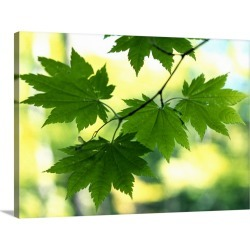 Large Gallery-Wrapped Canvas Wall Art Print 30 x 22 entitled Close up of maple leaves