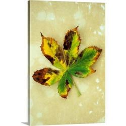 Large Solid-Faced Canvas Print Wall Art Print 20 x 30 entitled Yellow brown and green autumn leaf of Horse chestnut found on Bargain Bro Philippines from Great Big Canvas for $189.99