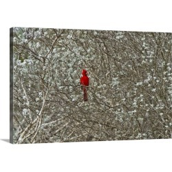 Large Gallery-Wrapped Canvas Wall Art Print 24 x 16 entitled A male cardinal in a sage brush