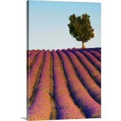 Large Solid-Faced Canvas Print Wall Art Print 20 x 30 entitled Lavender Field, Provence-Alpes-Cote d'Azur, France
