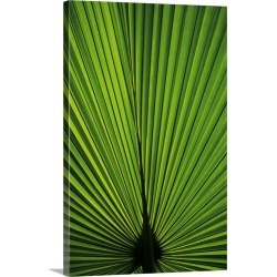 Large Gallery-Wrapped Canvas Wall Art Print 16 x 24 entitled Hawaii, Oahu, Backlit Fan Palm Leaf found on Bargain Bro India from Great Big Canvas - Dynamic for $214.99