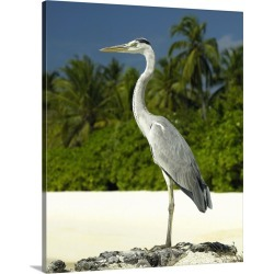 Large Gallery-Wrapped Canvas Wall Art Print 20 x 24 entitled Heron on a tropical beach found on Bargain Bro India from Great Big Canvas - Dynamic for $254.99