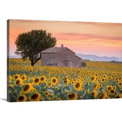 Large Solid-Faced Canvas Print Wall Art Print 30 x 20 entitled Provence, Valensole Plateau, France, Lonely farmhouse in a ...