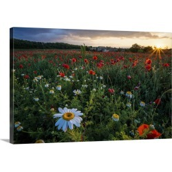 Large Gallery-Wrapped Canvas Wall Art Print 24 x 16 entitled A field of flowers in Monteriggioni