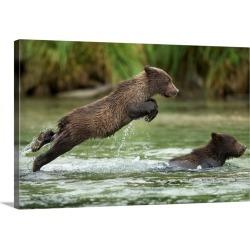 Large Gallery-Wrapped Canvas Wall Art Print 30 x 20 entitled Brown Bear Cub, Katmai National Park, Alaska