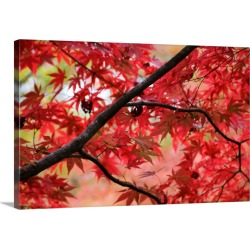 Large Gallery-Wrapped Canvas Wall Art Print 24 x 16 entitled Red leaves on tree branch, Kinki, Kyoto, Japan, North-East Asia found on Bargain Bro India from Great Big Canvas - Dynamic for $234.99