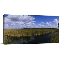 Large Gallery-Wrapped Canvas Wall Art Print 24 x 12 entitled Reflection of tall grass and cloud in water, Everglades Natio...