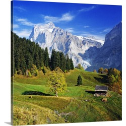 Large Gallery-Wrapped Canvas Wall Art Print 20 x 20 entitled Switzerland, Bern, Grindelwald, Countryside and Wetterhorn in...