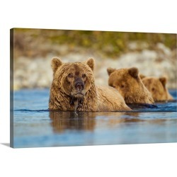 Large Gallery-Wrapped Canvas Wall Art Print 30 x 20 entitled Brown Bear And Cubs, Katmai National Park, Alaska