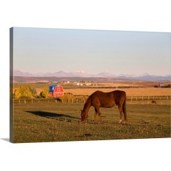 Large Gallery-Wrapped Canvas Wall Art Print 30 x 20 entitled Brown Horse Grazing In A Field In Autumn, Alberta, Canada