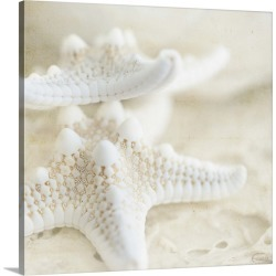 Large Gallery-Wrapped Canvas Wall Art Print 16 x 16 entitled Seashore Stars
