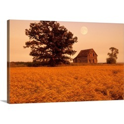 Large Gallery-Wrapped Canvas Wall Art Print 24 x 16 entitled Mature Winter Wheat With Old House, Beausejour, Manitoba, Canada found on Bargain Bro India from Great Big Canvas - Dynamic for $214.99