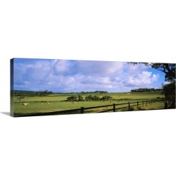 Large Gallery-Wrapped Canvas Wall Art Print 36 x 12 entitled Hay bales in a field, Australia