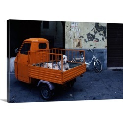 Large Gallery-Wrapped Canvas Wall Art Print 24 x 16 entitled Great Dane dog in the back of tiny orange 3-wheeled truck in ...