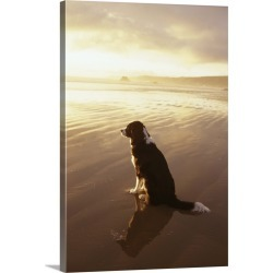 Large Solid-Faced Canvas Print Wall Art Print 20 x 30 entitled Border Collie watching the sun set at a beach in California found on Bargain Bro India from Great Big Canvas - Dynamic for $169.99