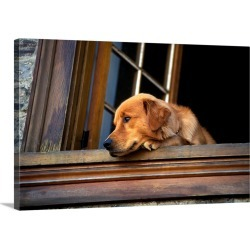 Large Solid-Faced Canvas Print Wall Art Print 30 x 20 entitled Dog looking out of window, Golden Retriever dog found on Bargain Bro from Great Big Canvas - Dynamic for USD $144.39
