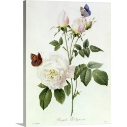 Large Solid-Faced Canvas Print Wall Art Print 30 x 40 entitled Rosa: Bengale the Hymenes, from Les Roses, 19th century