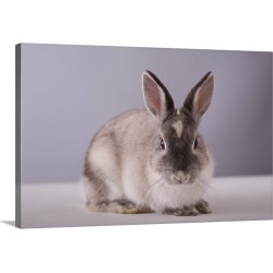 Large Gallery-Wrapped Canvas Wall Art Print 30 x 20 entitled Rabbit looking at camera